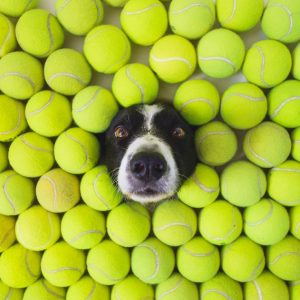 How Many Tennis Balls Can Fit in a Room?