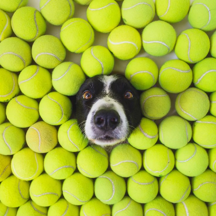 Tennis Balls And Dog